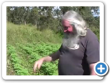 EP272_MARIJUANA_A_GROWERS_LOT_PART_2